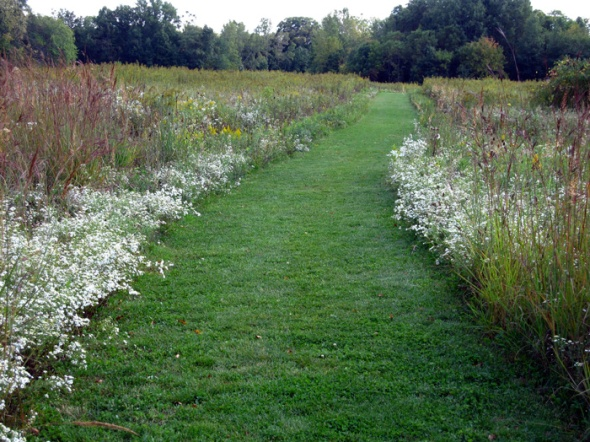 A prairie path in full summer (Credit: Celia Place)
