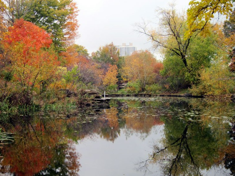 The Alfred Caldwell Lily Pond in autumn (Credit: Celia Her City)