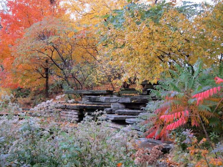 Foliage around the rocky ledges of the Lily Pond (Credit: Celia Her City)