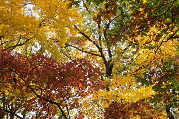 Michigan color (Credit: Celia Her City)
