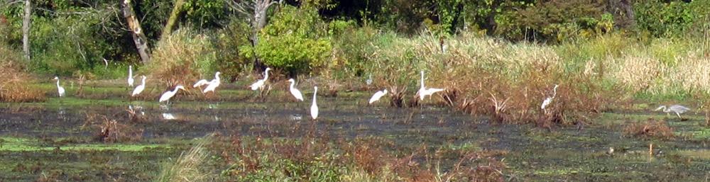 Wading birds (Credit: Celia Her City)