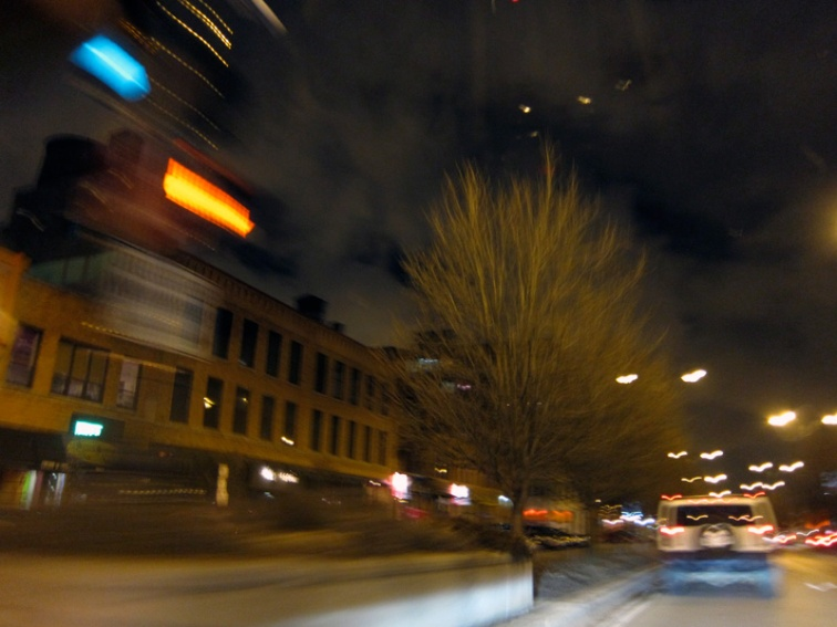 Night birds (Credit: Celia Her City)