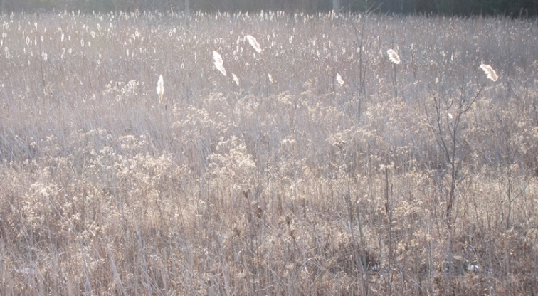 Effulgent grasses (Credit: Celia Her City)