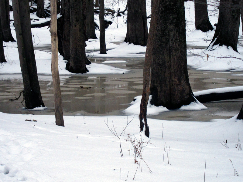 Modern puddle in the Warren Woods (Credit: Celia Her City)