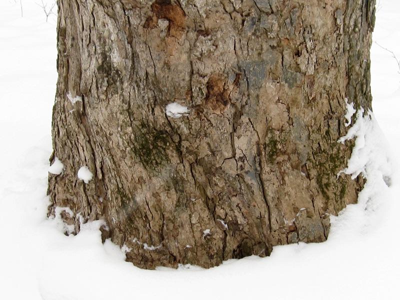 Tree trunk in the Warren Woods (Credit: Celia Her City)
