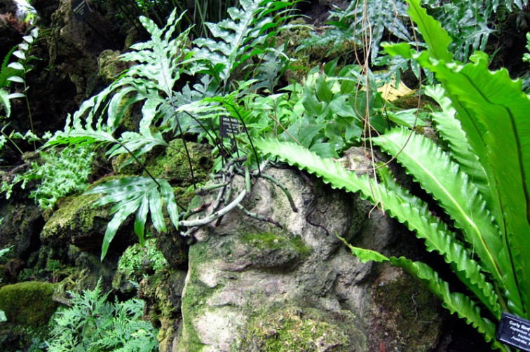 Rock in the Fern Room of the Lincoln Park Conservatory, © 2013 Celia Her City