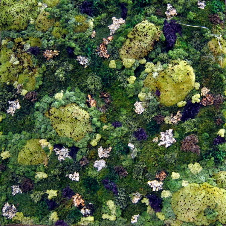 Mosses for Meditation, Chicago Flower and Garden Show, © 2013 Celia Her City