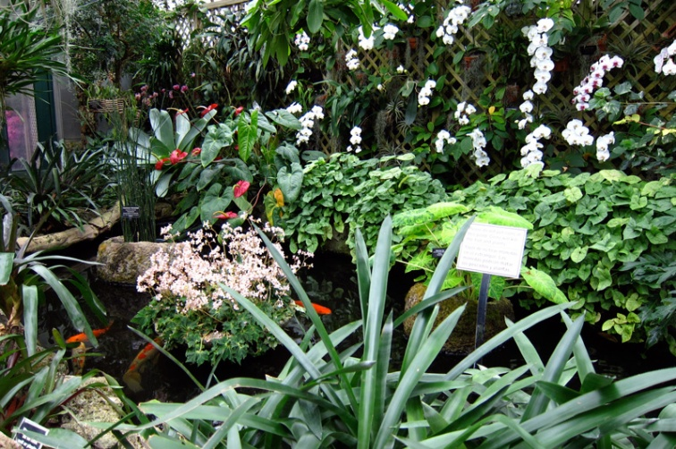 Orchid room pond in the Lincoln Park Conservatory, Chicago, © 2013 Celia Her City
