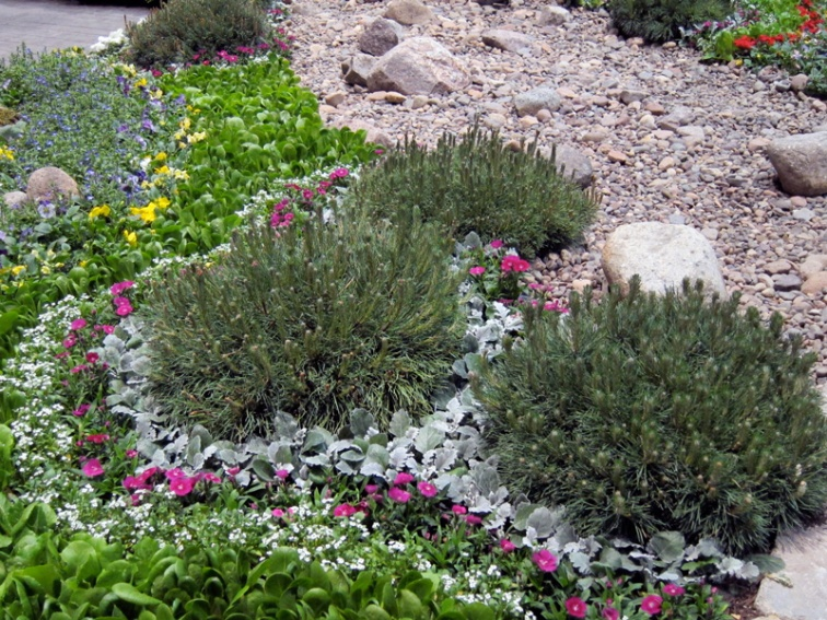 Bedding plants with gravel and evergreens, Chicago Flower and Garden Show, © 2013 Celia Her City