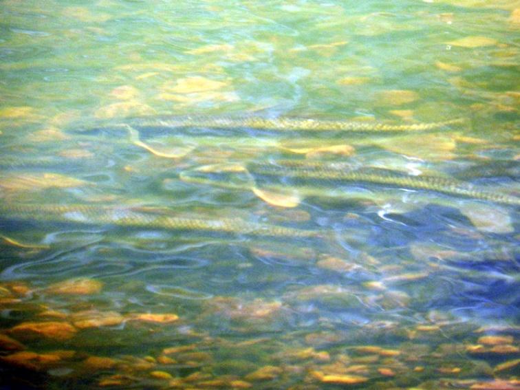 Sci-fi fish, © 2013 Celia Her City