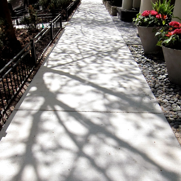 The sidewalks are beginning to fill up with the shadows of spring leaves.