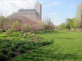 The perennial gardens near the Belden-Stratford in spring (Chicago), © 2013 Celia Her City