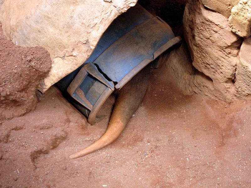Aardvark in hiding, © 2013 Celia Her City