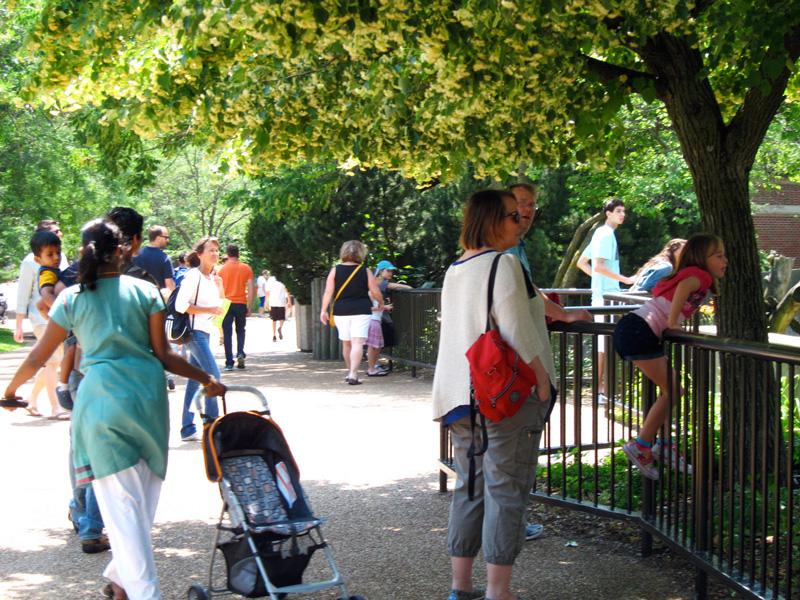 Zoo going, © 2013 Celia Her City